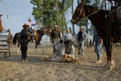 Branding Calves - Branding calves at the Bench Creek Ranch
