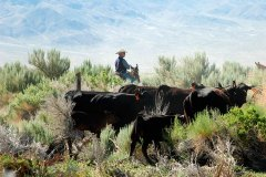 Home on the Range - Paul Plouviez, owner of Bench Creek Ranch, at home on the range