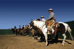 The Horses in Quiet Anticipation