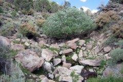 Bench Creek Spring
